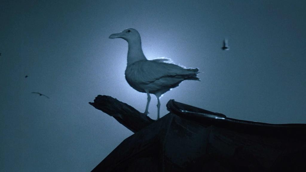 Blu-ray Review: Jonathan Livingston Seagull (1973)